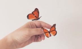 【動画】静止画なのに蝶々が動く?「Motionleap」の機能