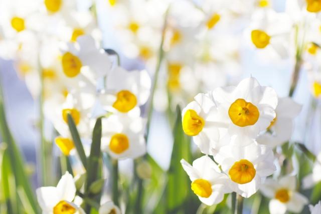 花 高嶺の花