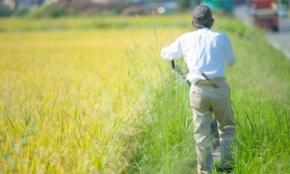 飛ばないテントウムシが日本を救う?「がっちりマンデー!!」で話題の農政事情