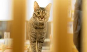 猫が店員の本屋さん。猫好きサラリーマンが実現した夢と働き方