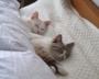 「低反発まくらは安眠できない」睡眠専門医に聞く新常識