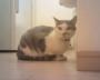 外出先から飼い猫と遊べる?見守りカメラよりすごいペットトイを試してみた