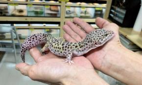 コロナでなぜか爬虫類専門店が人気。有事を追い風にする「儲けの秘密」