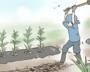 コロナ禍でバイトを辞めた25歳が、農業に挑戦。「手取り15万以下」でも本音は…
