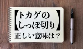 大阪・吉村知事も誤用した「トカゲのしっぽ切り」正しい意味は?