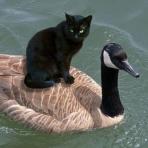 黒猫ドラネコ