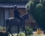 全国に2か所だけ。競走馬の調教施設がある村での生活とは